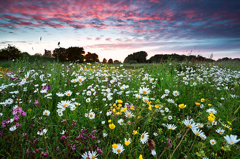 many summer wildflowers on meadow at dra