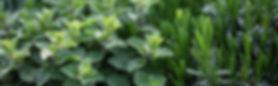 Herb%2520Plants_edited_edited.jpg