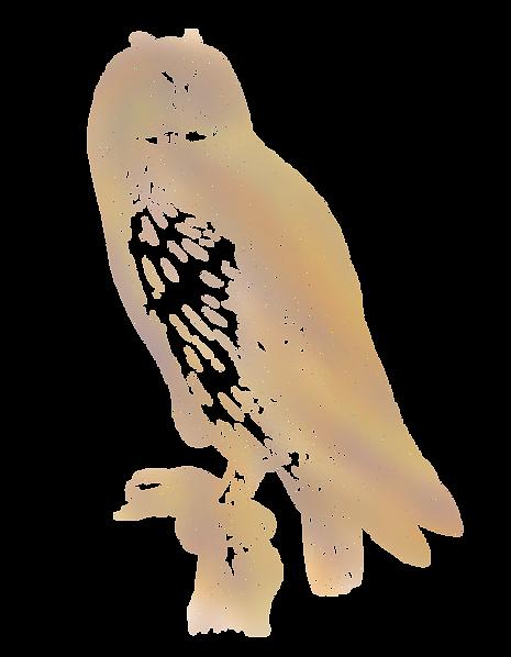 Jodric Owl.png
