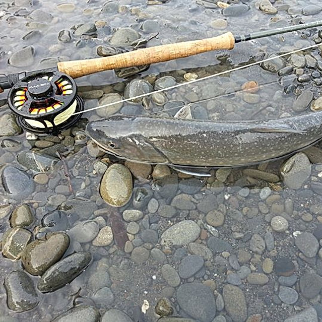 Dolly Varden Released Safely Hoh River, Fly Fishing #keepemwet