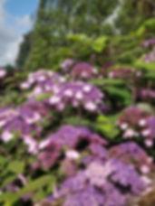 cappoquin flowers.jpg