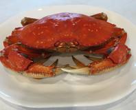 Beautiful crab