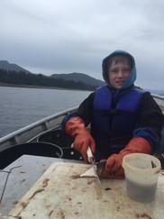 Chopping bait