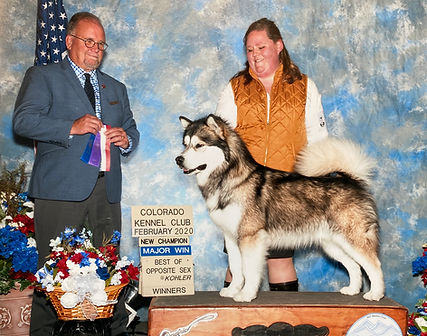 dog trainer parker colorado mentor puppy aggression private lesson