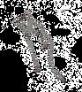 Kallima_Logo Lettre_Plume_01.tif
