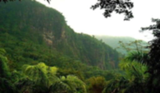 gvianskaia-amazonia.jpg