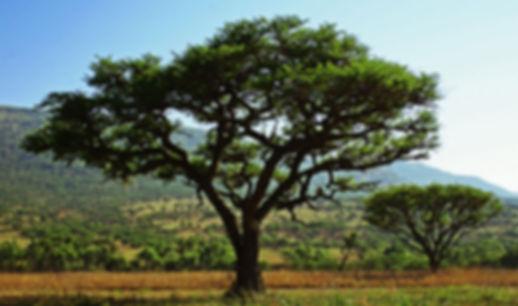 черное дерево.jpg