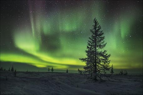 tundra_ zimoi_ polyarnaya_ noch.jpg