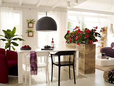 цветы на кухне.jpg