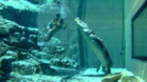 в бассейне с крокодилом