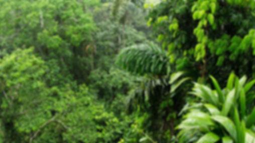 тропический лес.jpg