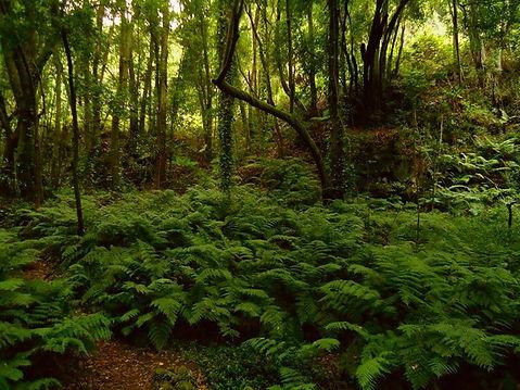 переменно- влажные леса  в Африке.jpg
