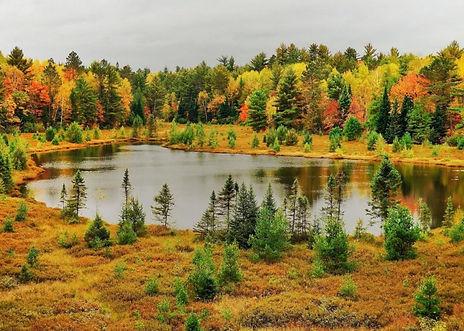 лесное озеро смешанного леса.jpg