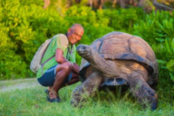 сейшельские черепахи.jpg