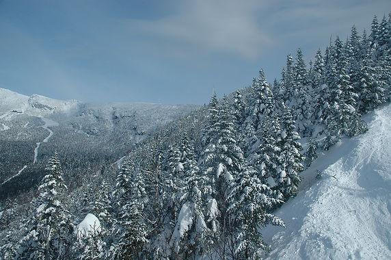 зимний  лес.jpg
