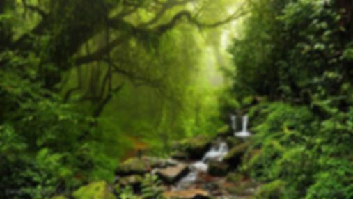 тропический лес в перу.jpg