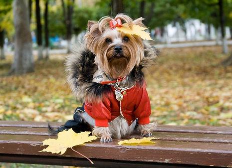 одежда для маленькой собаки.jpg