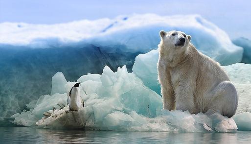 белый медведь на льдине.jpg