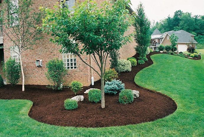 виды газонов. выбор травы для газна