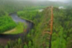 лес, тайга, окружающий мир.jpg