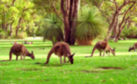 животный мир Австралии.jpg