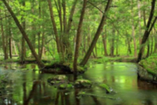 лес в румынии.jpg