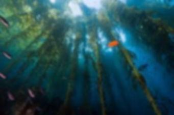 водоросли индийского океана.jpg