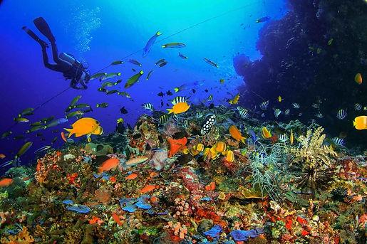 Бали - подводный мир.jpg
