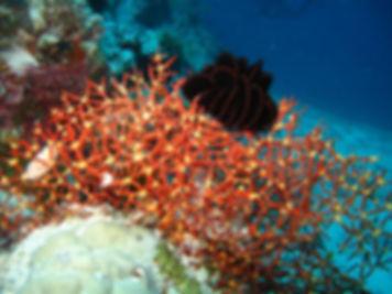 кораллы.jpg