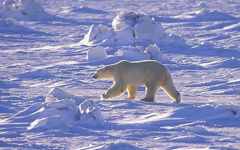 arcticheskaya pustinya zimoi.jpg