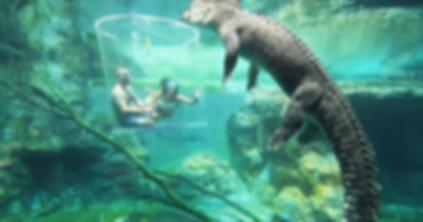 крокодил.png
