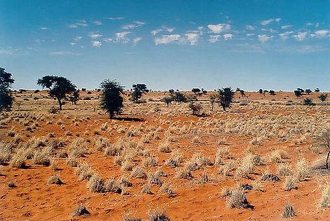 Пустыня Калахари.jpg