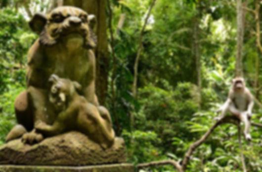 лес обезьян.jpg