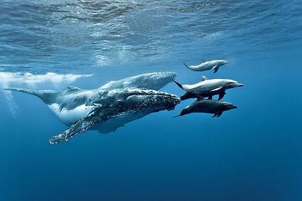 дельфины и кит в индийском океане.jpg