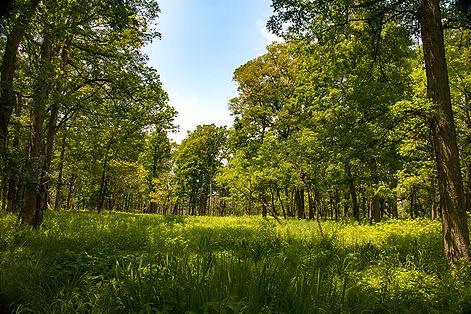 смешанный лес.jpg