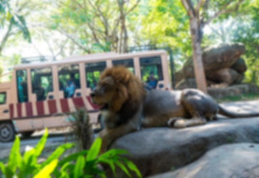 парк Бали Сафари.jpg