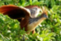 флора и фауна южной америки.jpg