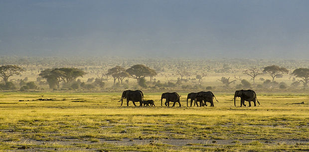 саванна Африки.jpg