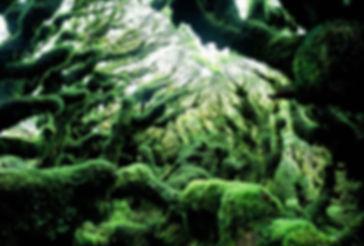 гоблинский лес в новой зеландии.jpg