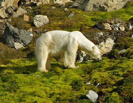 arkticheskaya pustinya letom.jpg