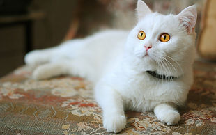 домашние кошки.jpg