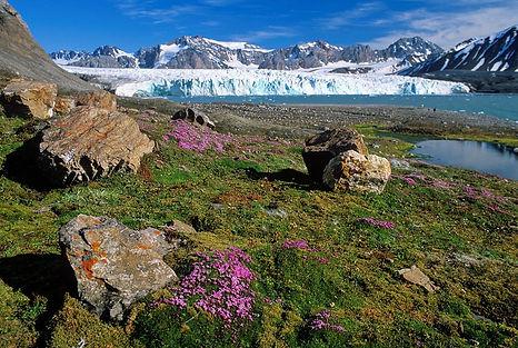арктическое лето.jpg
