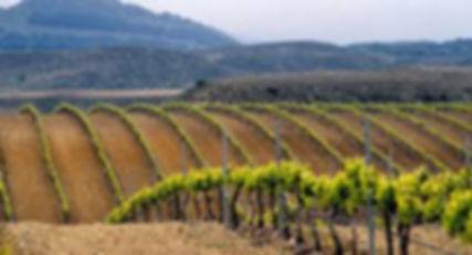 Виноградники Риохи (2).jpg