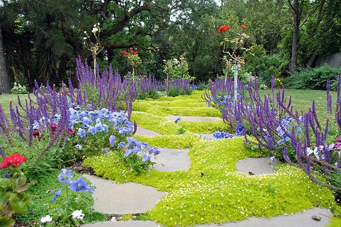 газон из почвопокрывных растений.jpg