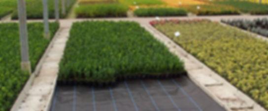 применение мульчирования при выращивании