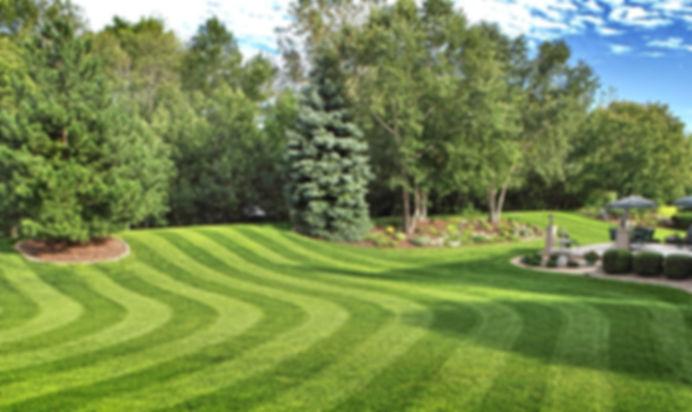рулонный газон. трава для рулонного газона