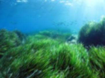 зленые поля индийского океана.jpg