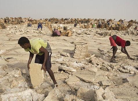 Эфиопия, сбор соли.jpg