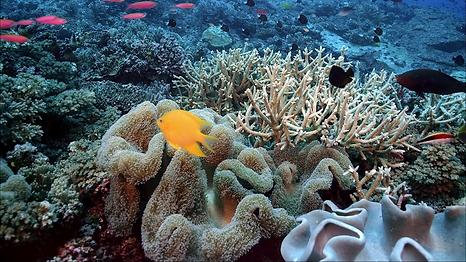 кораллы.png