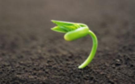 росток пробился из земли.jpg